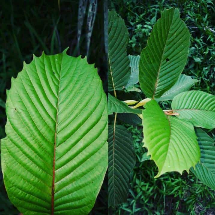 Hill Country Kratom Review: An Intentionally Small, High-Quality Vendor