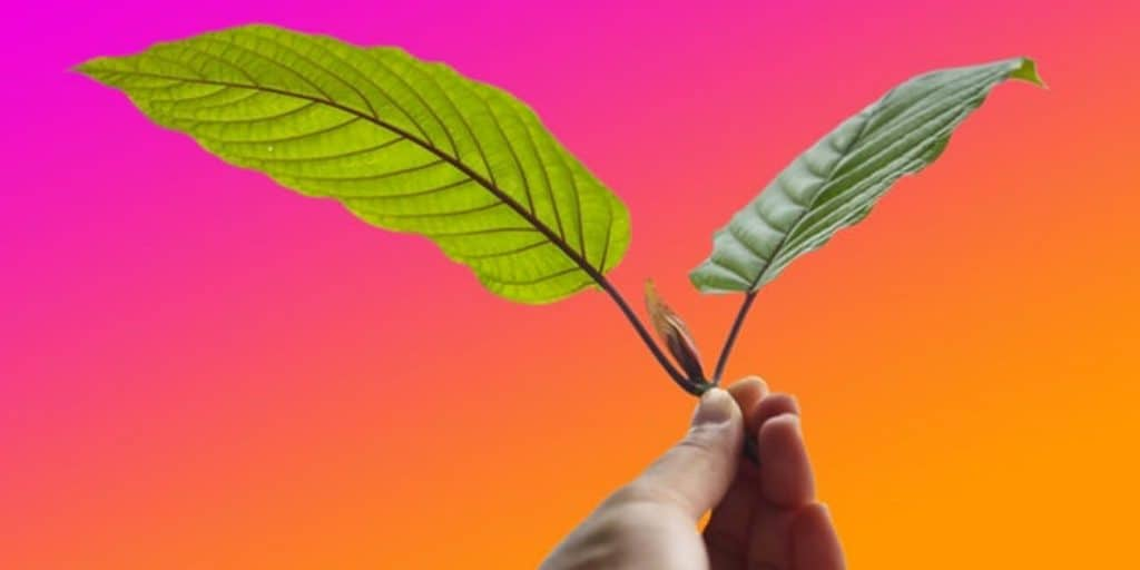 Kratom 5280 Review: A Reliable Alternative to Your Favorite Vendors